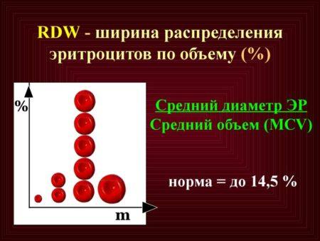 Норма RDW